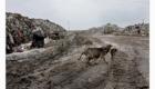 Pes se svým úlovkem na skládce v Albánii