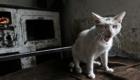 Kočka v cikánské osadě
