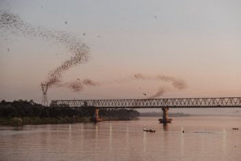 Jak jsem v Barmě fotil netopýry